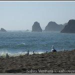 goat_rock_beach_7773