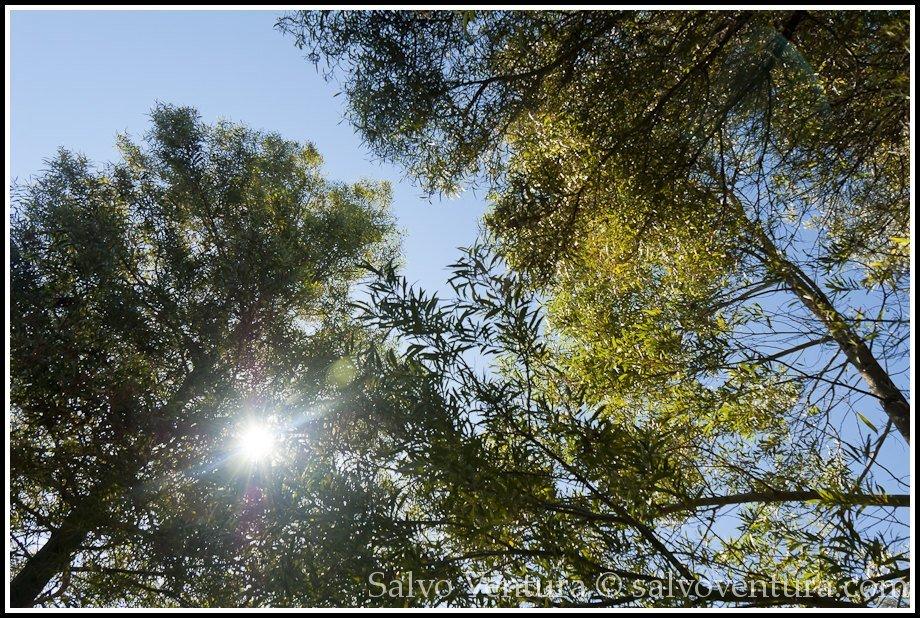 Resting - Shoreline Park, Mountain View