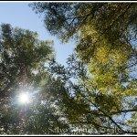Shoreline Park, Mountain View