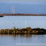shoreline park, mountain view 01