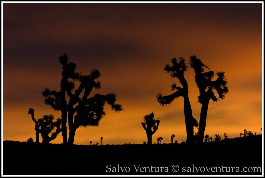 Sunrise, Death Valley Park, California