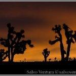blogexport_2011-12-28-death-valley_dsc_0038