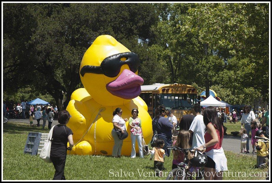 2011 Silicon Valley duck race, Vasona Park, Los Gatos