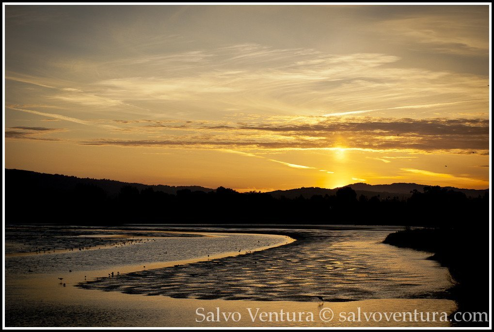 sunset in palo alto baylands
