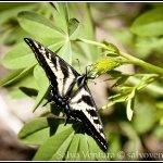 blogexport_salvo-ventura_2012-06-14-lake-tahoe_dsc_3335