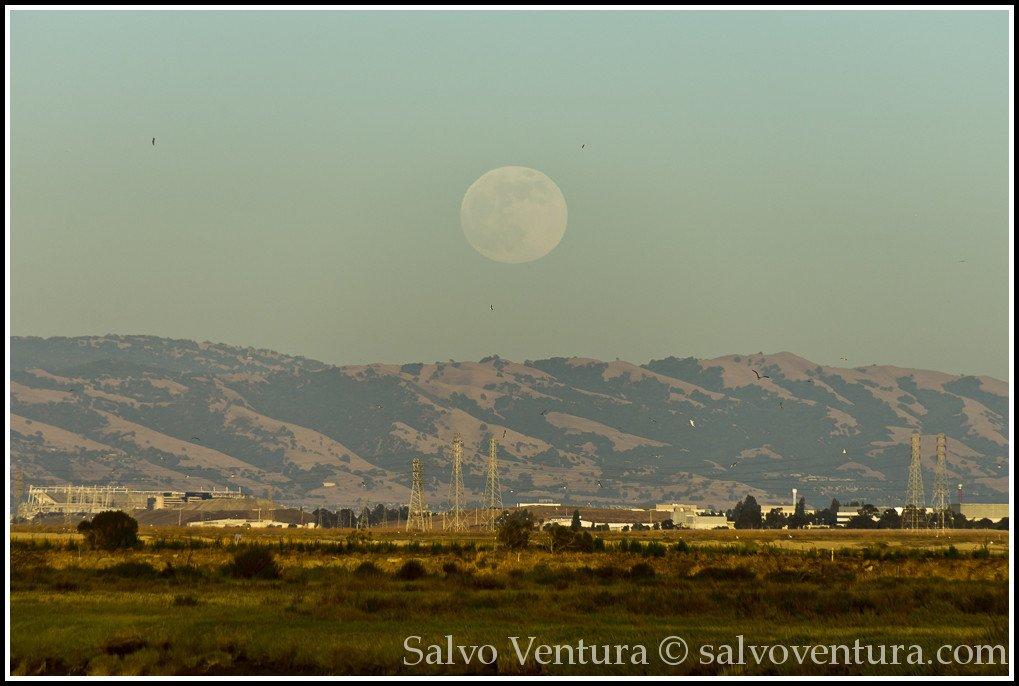 blogexport_salvo-ventura_2013-06-22-full-moon-at-baylands__dsc1317