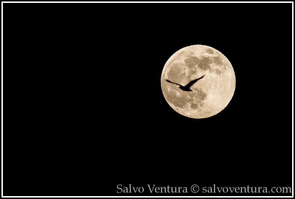 blogexport_salvo-ventura_2013-06-22-full-moon-at-baylands__dsc1390