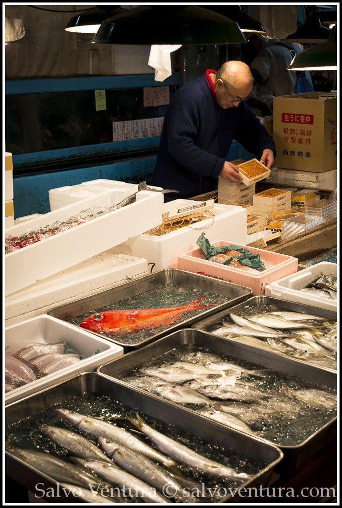 blogexport_salvo-ventura_2013-11-14-tokyo-tsukiji-fish-market__dsc3156