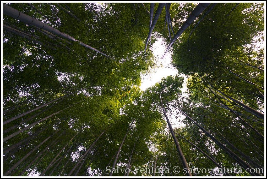 blogexport_salvo-ventura_2013-11-16-kamakura-with-akiko-and-kumi__dsc3408