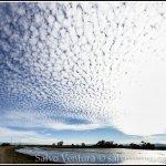 2014.12.27 Palo Alto Baylands_Panorama-01_salvoventura.com