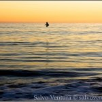 salvoventura.com-free-aptos-california