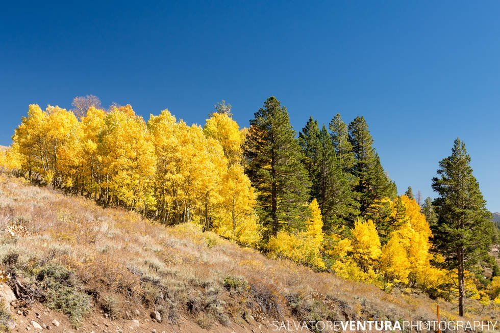 salvoventura_mono_county_fall_colors_DSC_3574