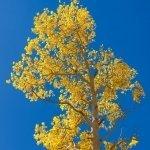 salvoventura_mono_county_fall_colors_DSC_3492_featured
