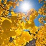 salvoventura_mono_county_fall_colors_DSC_3514_featured
