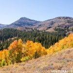 salvoventura_mono_county_fall_colors_DSC_3555_featured
