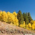 salvoventura_mono_county_fall_colors_DSC_3574_featured