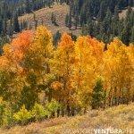 salvoventura_mono_county_fall_colors_DSC_3575_featured