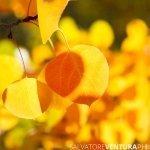 salvoventura_mono_county_fall_colors_DSC_3694_featured