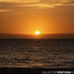 salvoventura_travel_maui_012