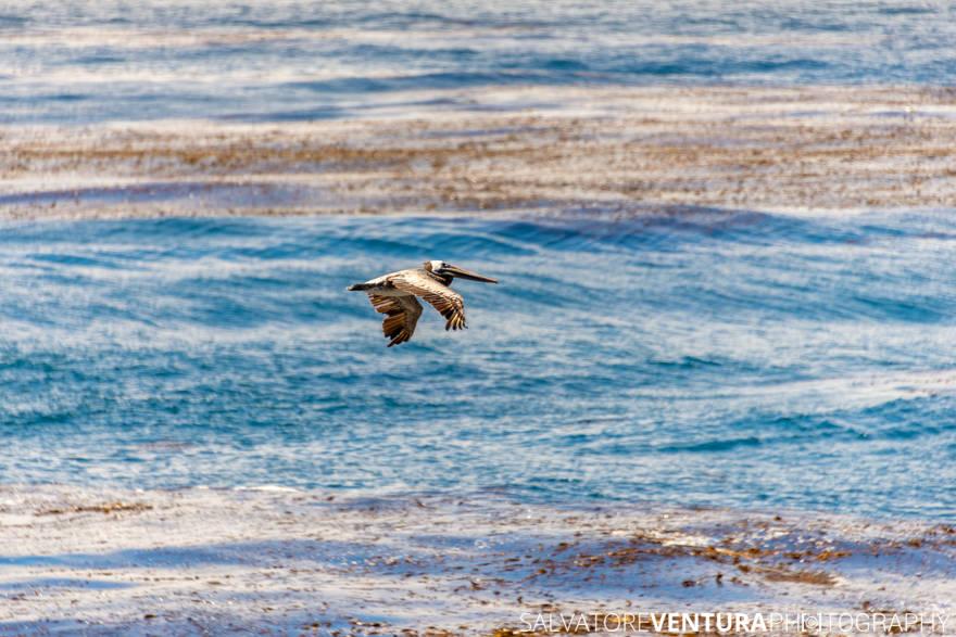 Salvo Ventura - Carmel and Point Lobos