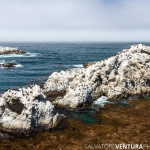 Salvo Ventura - Carmel and Point Lobos