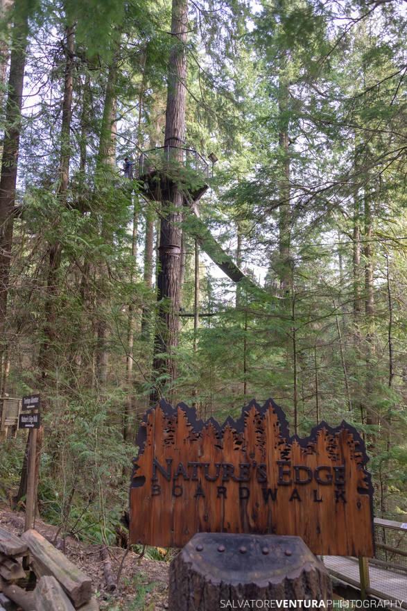 Vancouver, Capilano Bridge Park, Treetop Adventures (in the back)