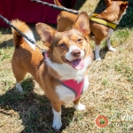 Happy Dog at the Berryessa Art and Wine Festival - Advantage-Photography.com