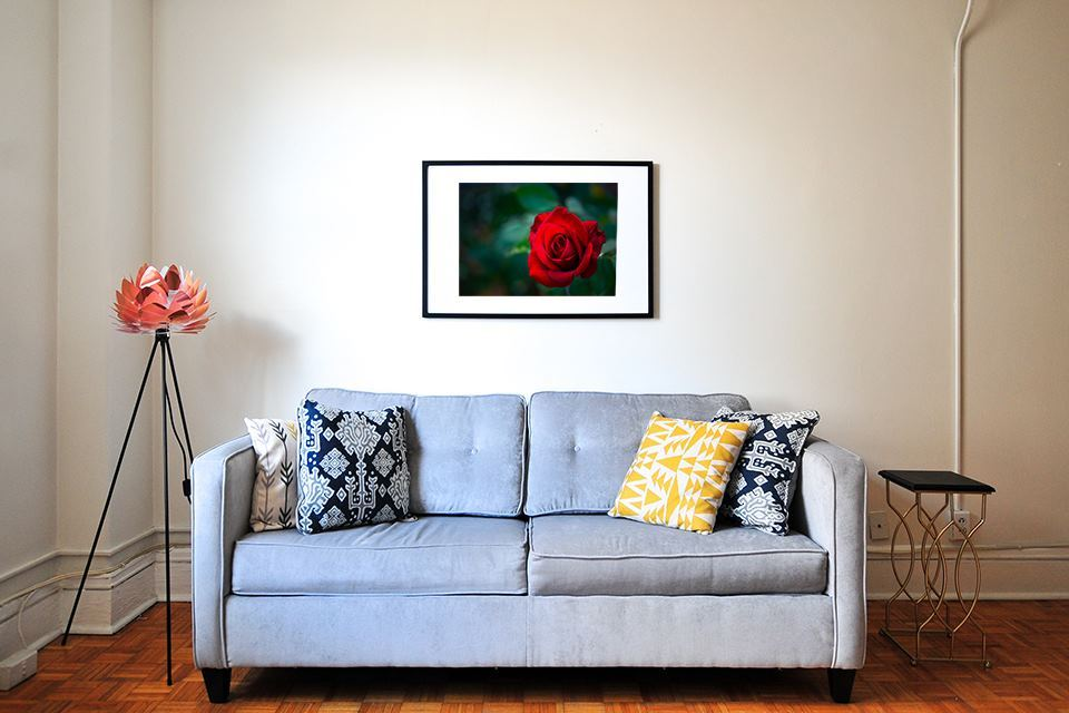 Red Rose, in wall art decor